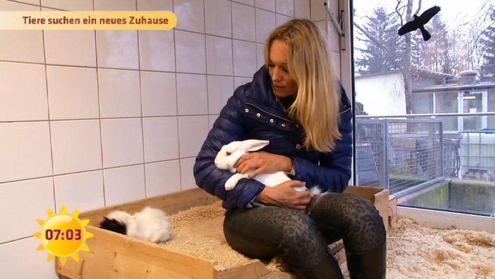 Zuhause gesucht: Tierheim München