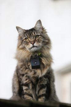 Tierisch süß!  - Katzen haben viele Geheimnisse. In dieser Dokumentation werd...