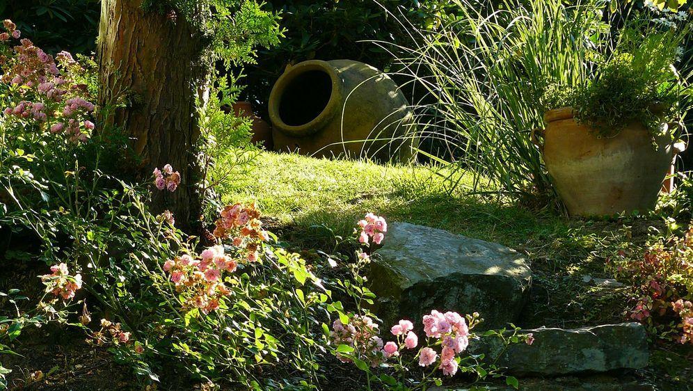 Rosengarten anlegen tipps und tricks sat 1 ratgeber for Gartengestaltung wege anlegen