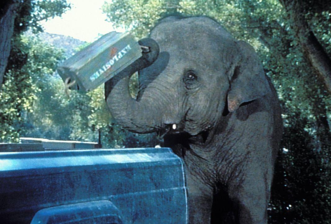 """Im gefährlichen """"Arbeitseinsatz"""": ein Elefantenkind ... - Bildquelle: 2007 Warner Bros. All Rights Reserved."""