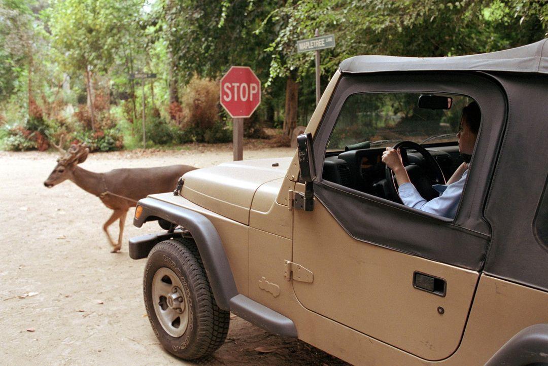 Ausgerechnet, als Rory (Alexis Bledel) einen wichtigen Test schreiben muss, verschläft sie und baut auf dem Weg beinahe einen Wildunfall. Doch die L... - Bildquelle: 2000 Warner Bros.