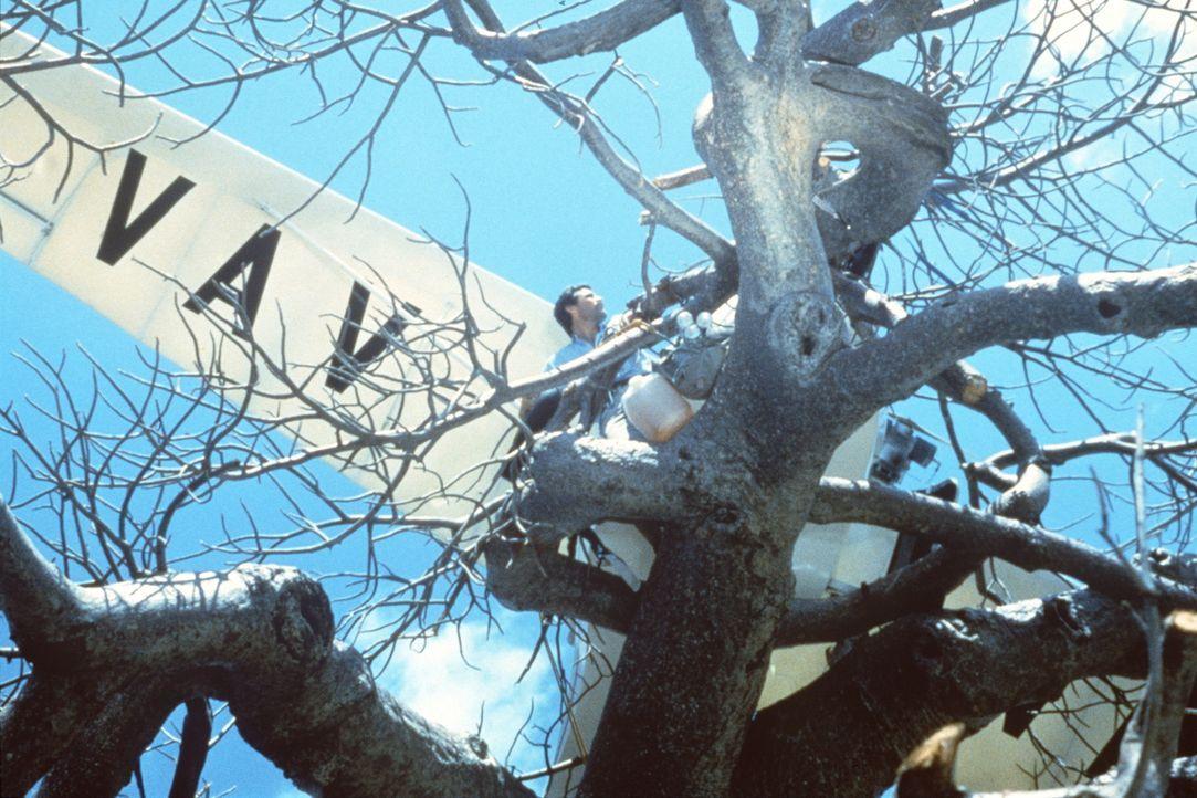 Der Zoologe Dr. Stephen Marshall (Hans Strydom) hat ein Problem: Er musste mit seinem Leichtflugzeug in einem Affenbrotbaum notlanden ... - Bildquelle: Columbia Pictures