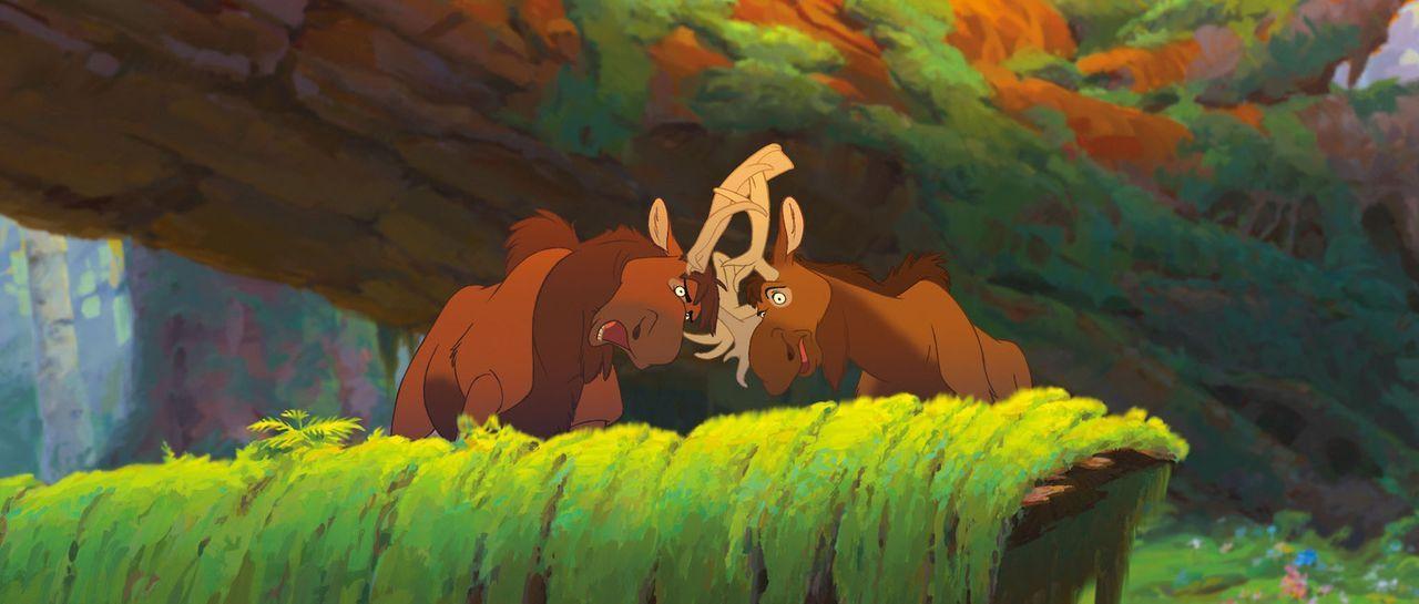 Zwischen den beiden Elchen Benny (r.) und Björn (l.) kommt es ständig zum Streit. - Bildquelle: Buena Vista Pictures Distribution. All Rights Reserved.