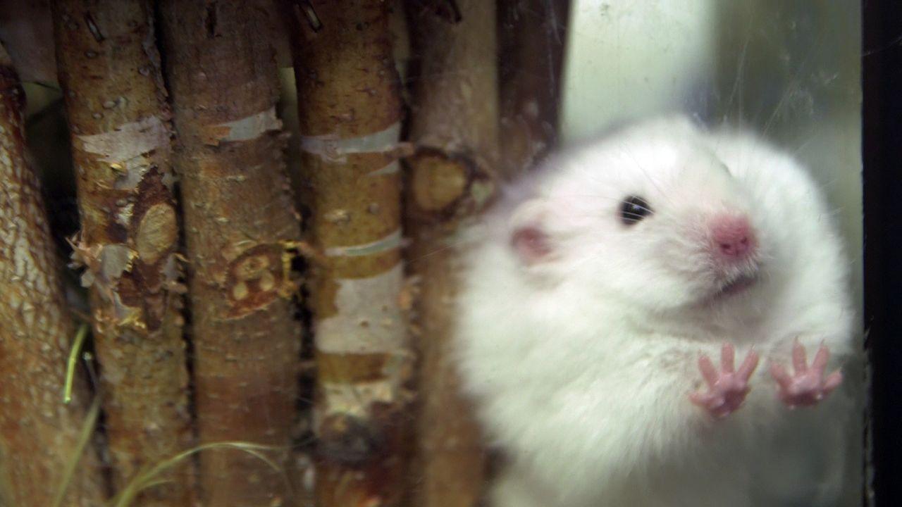 pbb-Hamster_03