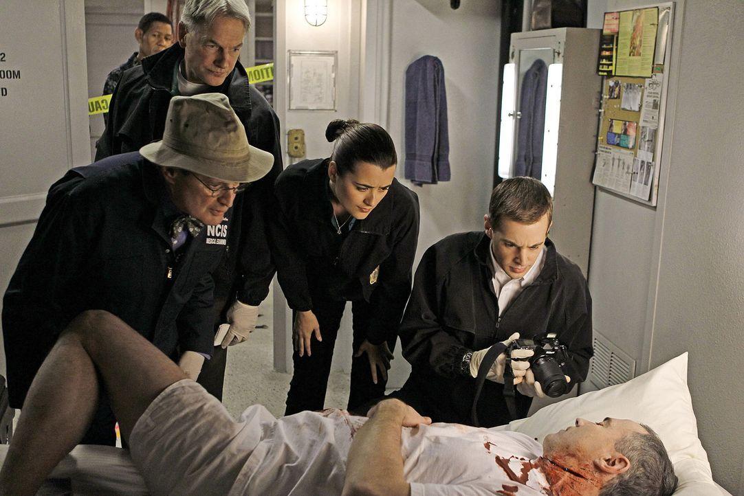 Ein neuer Fall bringt das Team um Ducky (David McCallum, l.), Ziva (Cote de Pablo, 2.v.r.), McGee (Sean Murray, r.) und Gibbs (Mark Harmon, 2.v.l.)... - Bildquelle: CBS Television
