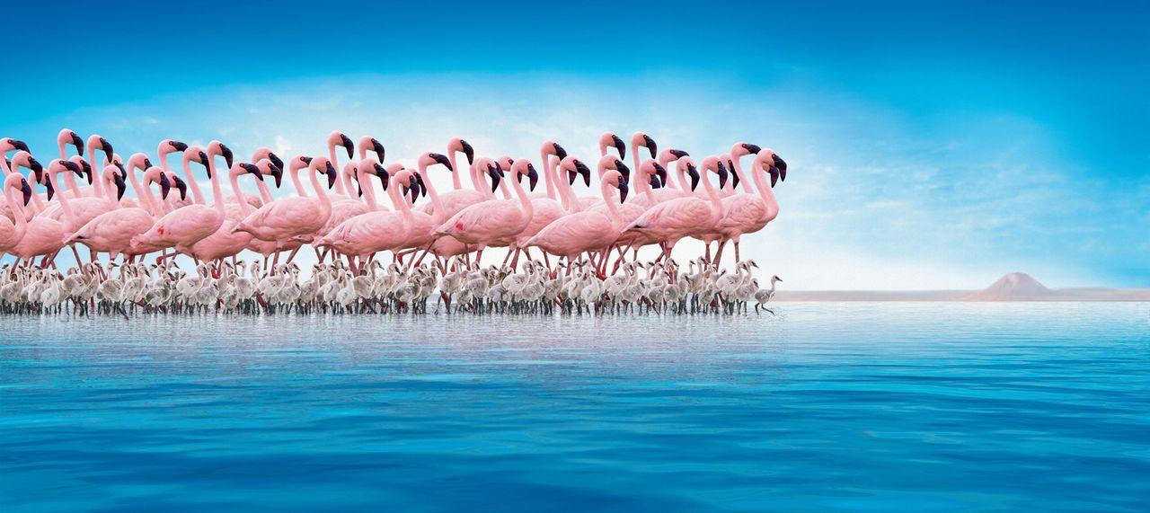 Am Ufer des entlegenen Natronsees im Norden Tansanias lebt eine gigantische Kolonie von über 1,5 Millionen Flamingos. Inmitten dieser erbarmungslose... - Bildquelle: Disney Enterprises, Inc.  All rights reserved.