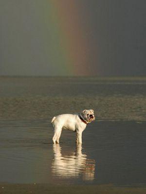 fruehstuecksfernsehen-studiohund-lotte-allgemein-001 - Bildquelle: Stefan Pulvermüller