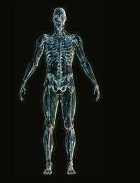 Skelett-white