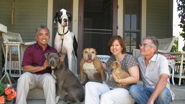 Familie Moore hat große Probleme mit ihrer 65 Kilo schweren Deutschen Dogge B...