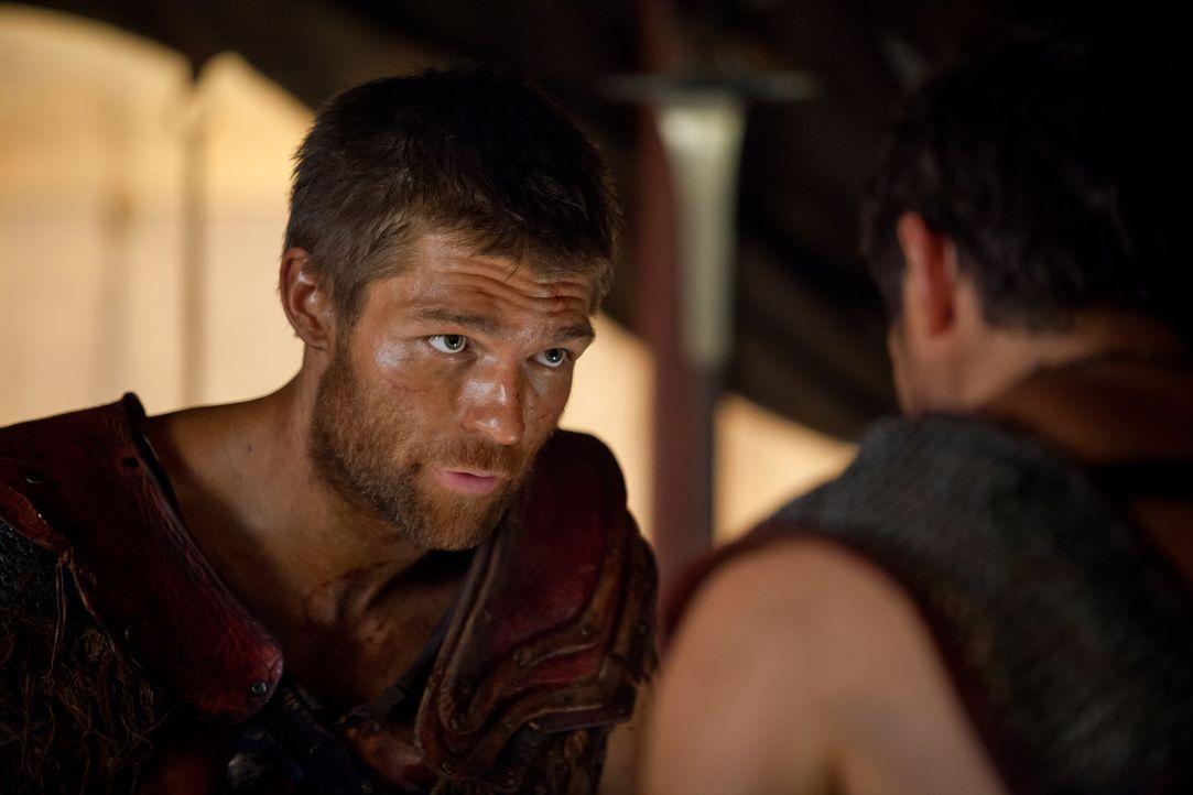 Sein neuer Gegner ist der hervorragende Stratege Marcus Crassus: Spartacus (Liam McIntyre) ... - Bildquelle: 2013 Starz Entertainment, LLC.  All Rights Reserved
