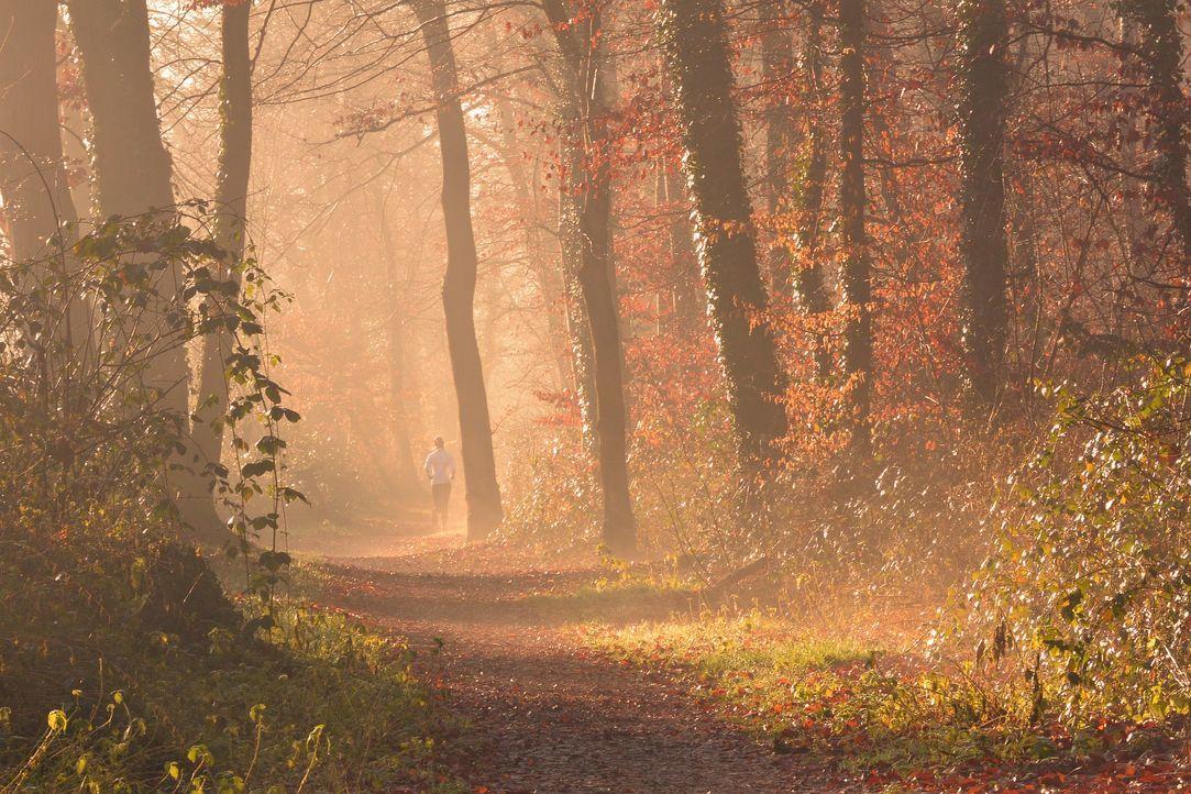 fog-1856722_1920 - Bildquelle: Pixabay