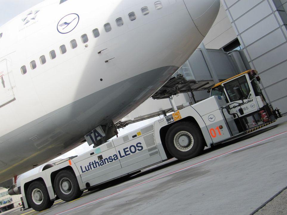 Der größte Flugzeugschlepper der Welt mit 11,5 Metern Länge und zwei 680 PS starken Dieselmotoren hebt große Flugzeuge am Bugrad hydraulisch an.... - Bildquelle: kabel eins