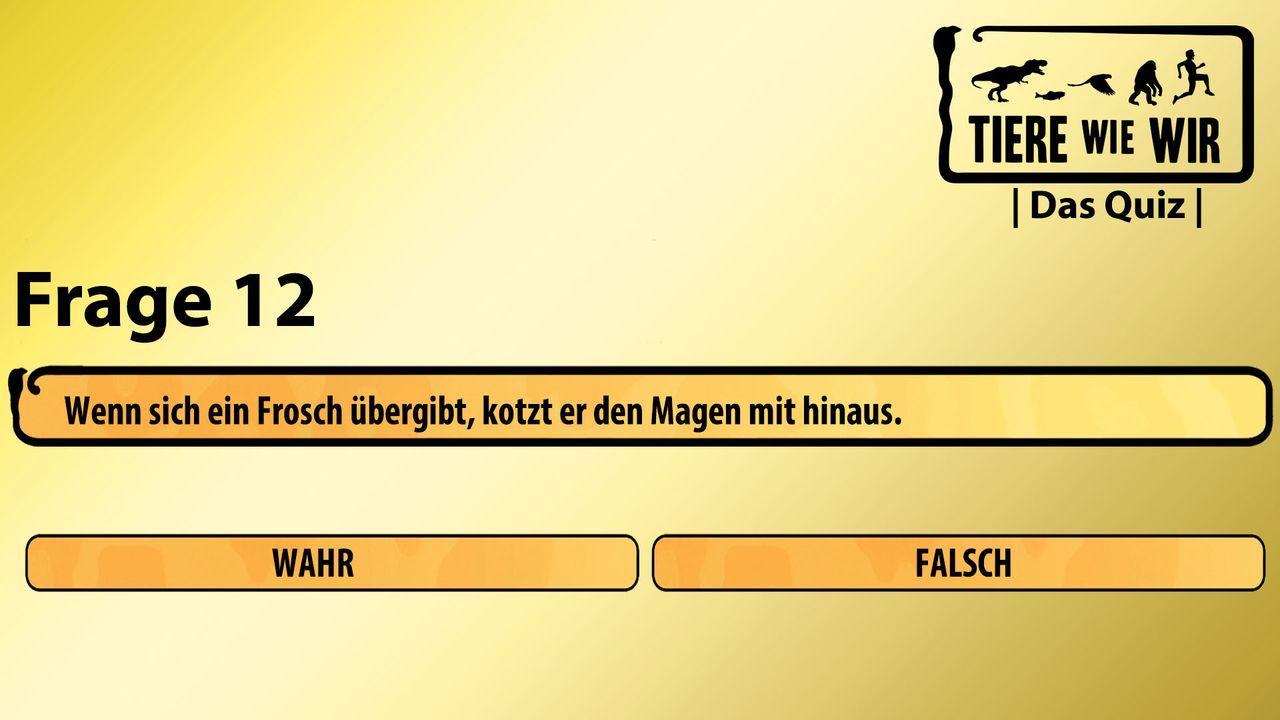 12_Frage_WF_Frosch