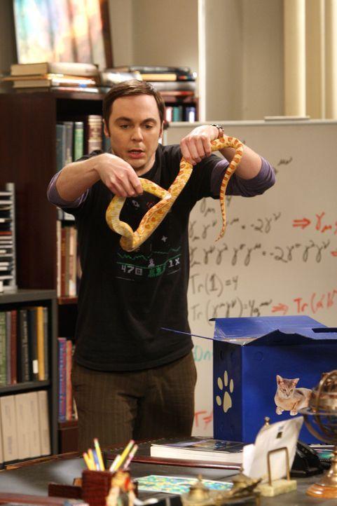 Sheldon (Jim Parsons) wird von seinen Freunden mit einem Streich zu Halloween reingelegt. Nun versucht er sich an ihnen zu rächen. Doch so richtig... - Bildquelle: Warner Bros. Television