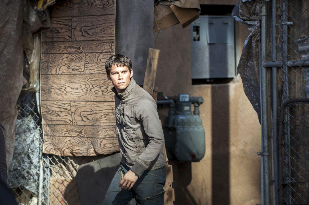 Maze-Runner2-02-2015Twentieth-Century-Fox - Bildquelle: 2015 Twentieth Century Fox