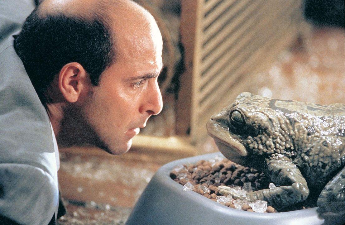 Der arrogante Bandenchef Arthur Herk (Stanley Tucci) und die psychedelische Kröte richten jede Menge Ärger an ... - Bildquelle: Touchstone Pictures