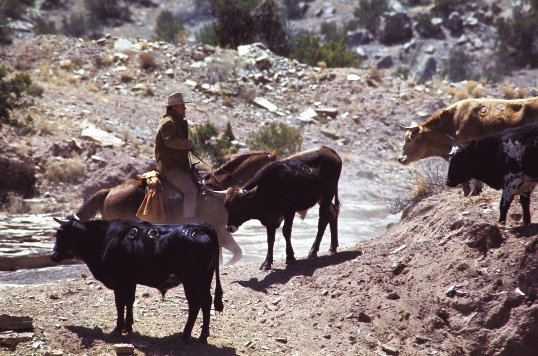 Der Goldrausch befällt den Wilden Westen und auf einmal ist Wil Andersen (John Wayne) mit seinem Vieh allein - und das ausgerechnet kurz vor dem al... - Bildquelle: Warner Bros.