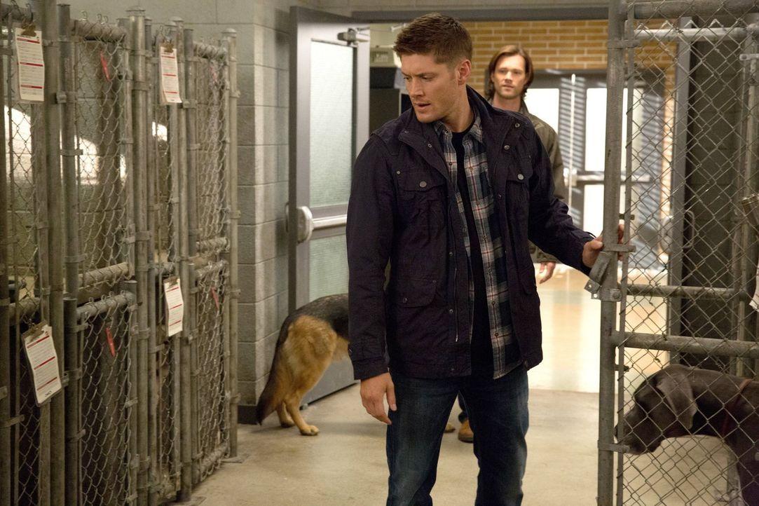 Ist es wirklich eine gute Idee, dass Deans (Jensen Ackles) Geist mit dem eines Hundes verschmelzt? - Bildquelle: 2013 Warner Brothers