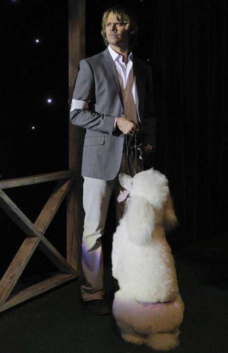 Bei den Ermittlungen in einem neuen Fall, kommt Deeks (Eric Christian Olsen) auf einen Hund ... - Bildquelle: CBS Studios Inc. All Rights Reserved.