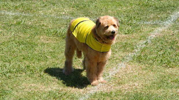 Straßenköter Kimble ist ein begabter Fußballer ... © 2006 Sony Pictures Telev...