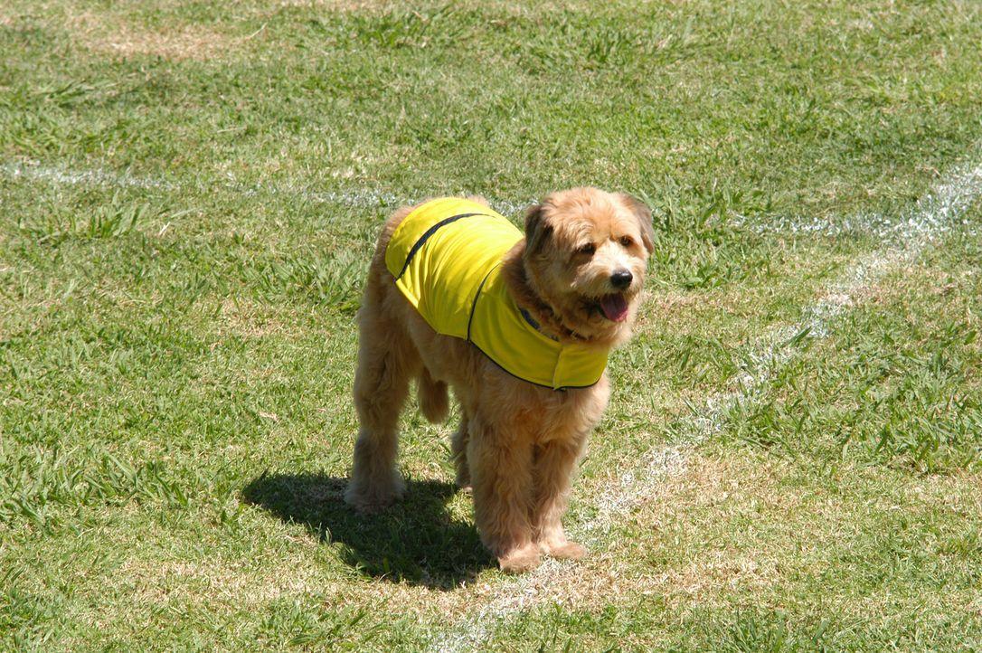 Straßenköter Kimble ist ein begabter Fußballer ... - Bildquelle: 2006 Sony Pictures Television International
