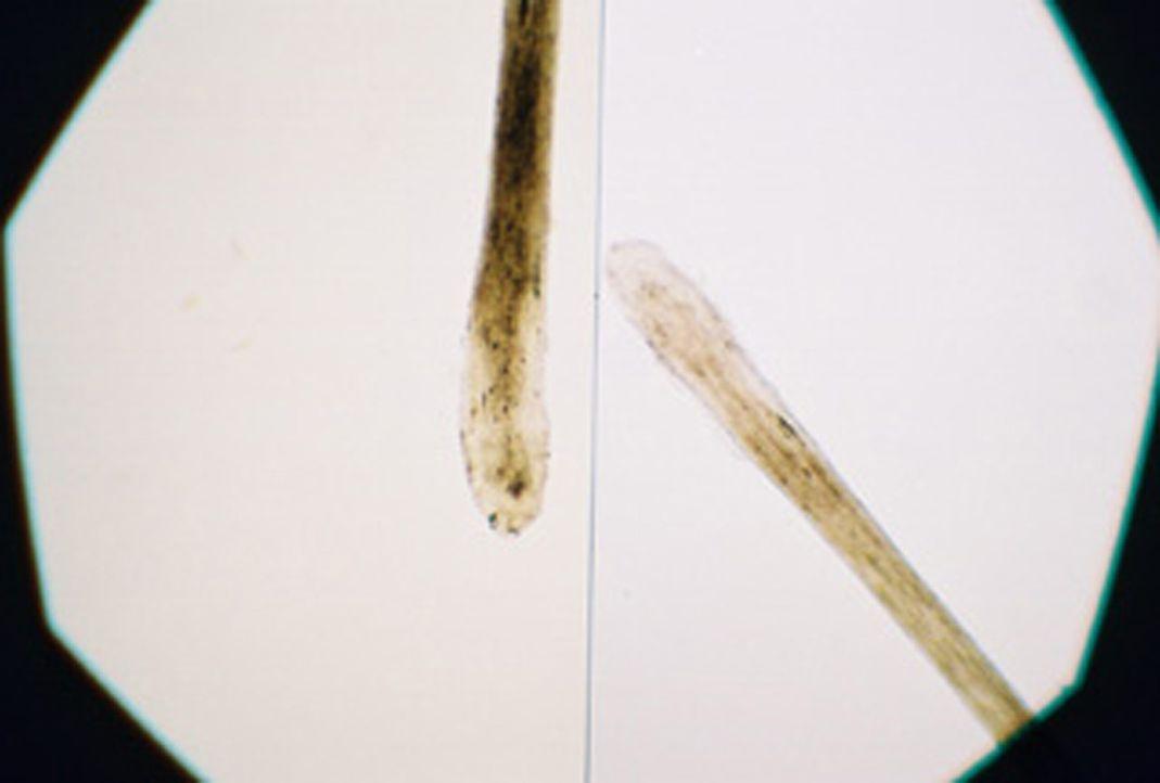 Erst 20 Jahre nach der Tat kann der Täter anhand des genetischen Fingerabdrucks überführt werden ... - Bildquelle: kabel eins