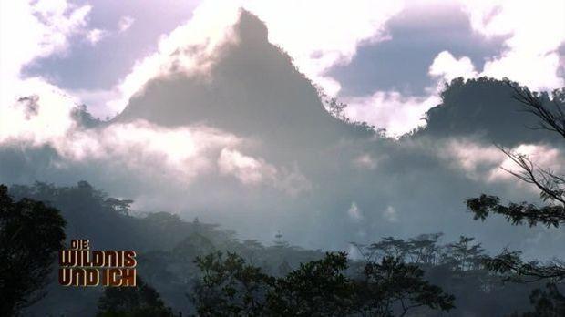 Gress in Papua Neuguinea9