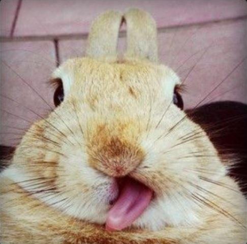 Mops-Selfie - Bildquelle: Pinterest