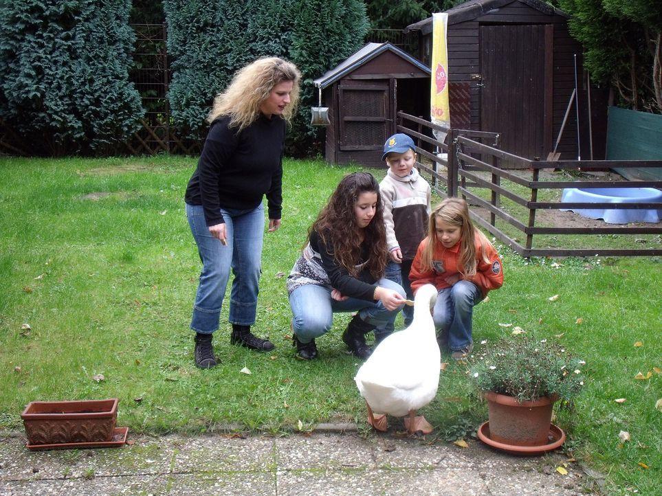 Zank am Zaun - Wenn Nachbarn sich den Krieg erklären: Wegen Emils Geschnatter hat Familie Hornung Probleme mit ihren Nachbarn ... - Bildquelle: SAT.1