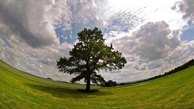 Baum vor dunklen Wolken