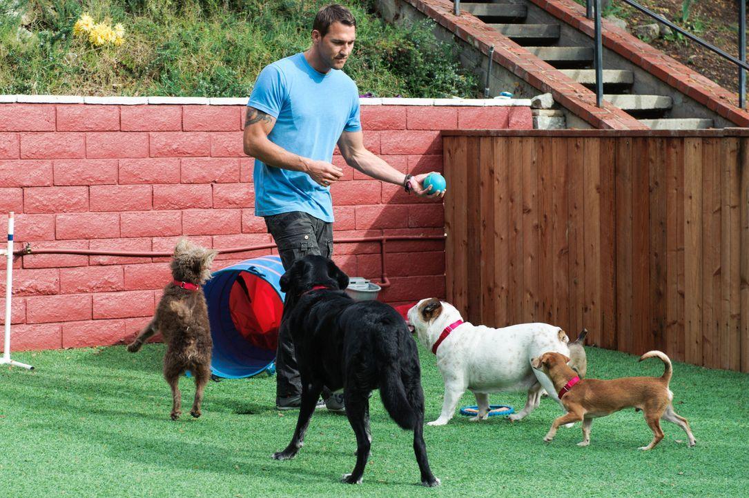 (2. Staffel) - Der Hundetrainer Brandon McMillan hat es sich zur Aufgabe gemacht, schwer vermittelbare Hunde aus dem Tierheim zu holen, sie zu train... - Bildquelle: 2013 Jaime Klein