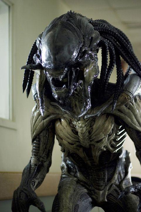 Auf einem Rauschiff entsteht eine neue Spezies aus Alien und Preditor. Als dieses Schiff in den Wäldern einer kleinen amerikanischen Ortschaft abstü... - Bildquelle: James Dittiger 2007 Twentieth Century Fox Film Corporation.