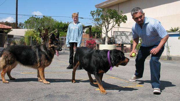 Hundeflüsterer Cesar Millan (r.) trifft auf Rottweiler Major und Schäferhündi...