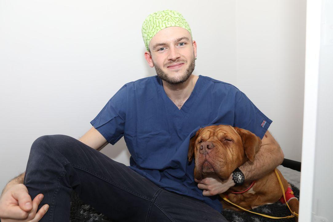 Cat operiert heute Irish Setter Dillon. Der Hund hat ein Geschwür am Bauch, ... - Bildquelle: True North