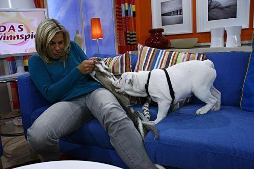 fruehstuecksfernsehen-studiohund-lotte-baby-012 - Bildquelle: Stefan Pulvermüller