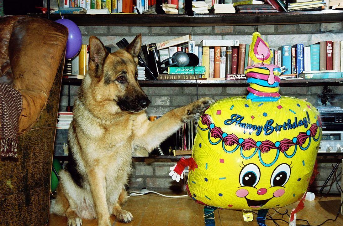Rex gratuliert seinem Herrchen zum Geburtstag. - Bildquelle: Sat.1