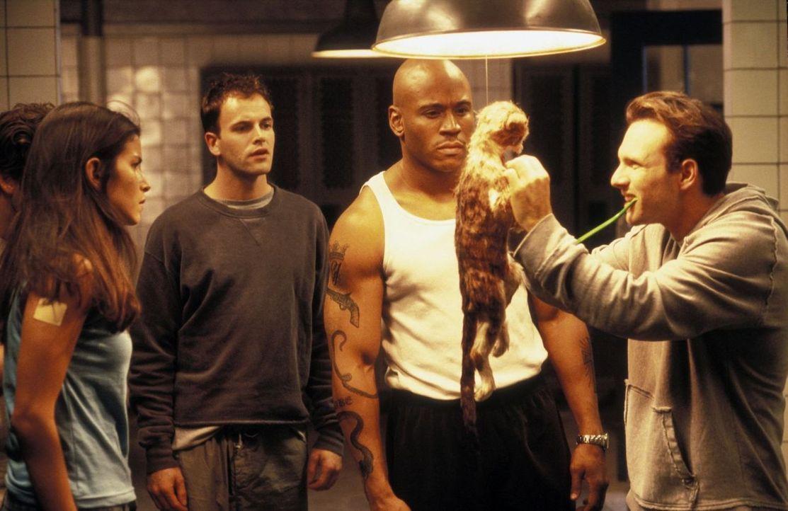 Zum Abschluss der Ausbildung werden sieben junge FBI-Agenten darunter Lucas (Jonny Lee Miller, 2.v.l.), Nicole (Patricia Velasquez, l.) und J.D. (Ch... - Bildquelle: Tobis Film
