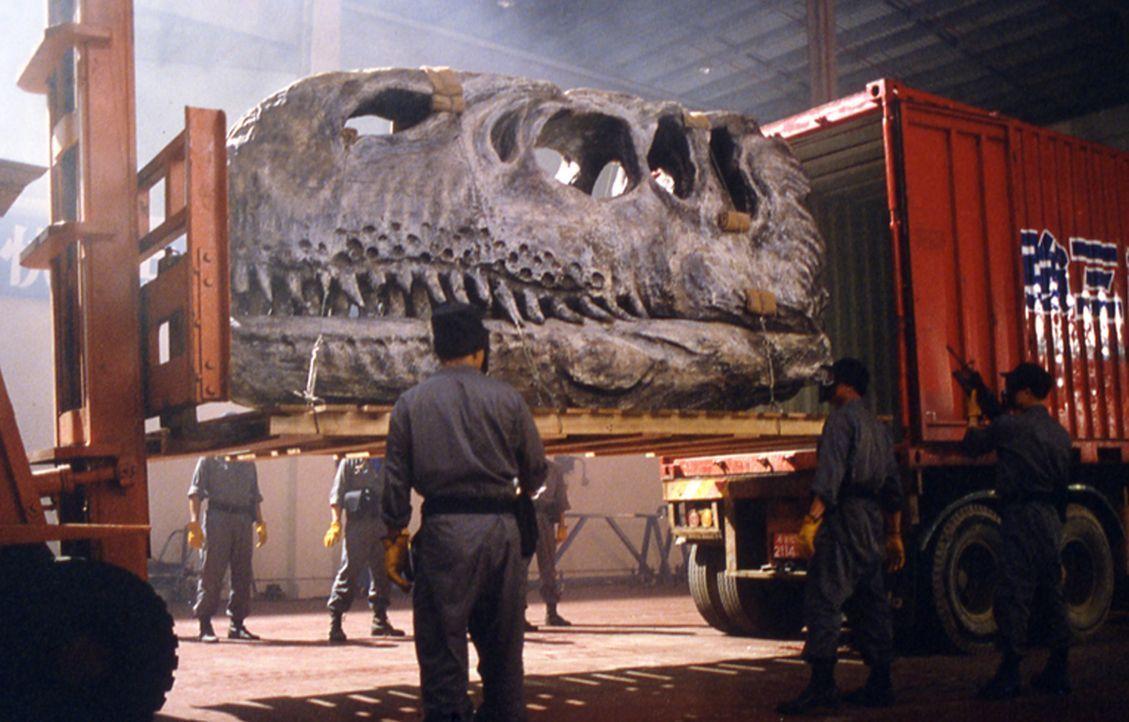 In Hongkong wird unter hohem Blutzoll und auf denkbar mysteriöse Weise der national bedeutsame Schädel eines Dinosauriers entwendet. Jetzt kann nur... - Bildquelle: Splendid Film