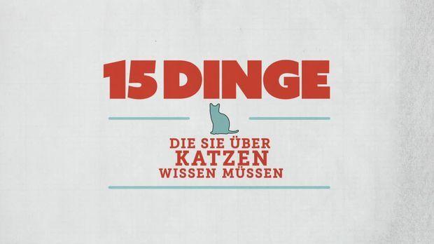 15 Dinge - 15 Dinge - 15 Dinge, Die Sie über Katzen Wissen Müssen!