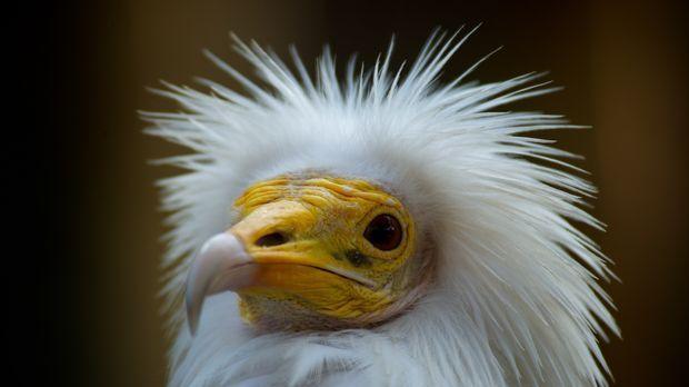 Im Grunde wissen wir erstaunlich wenig über unsere tierischen Erdenmitbewohne...