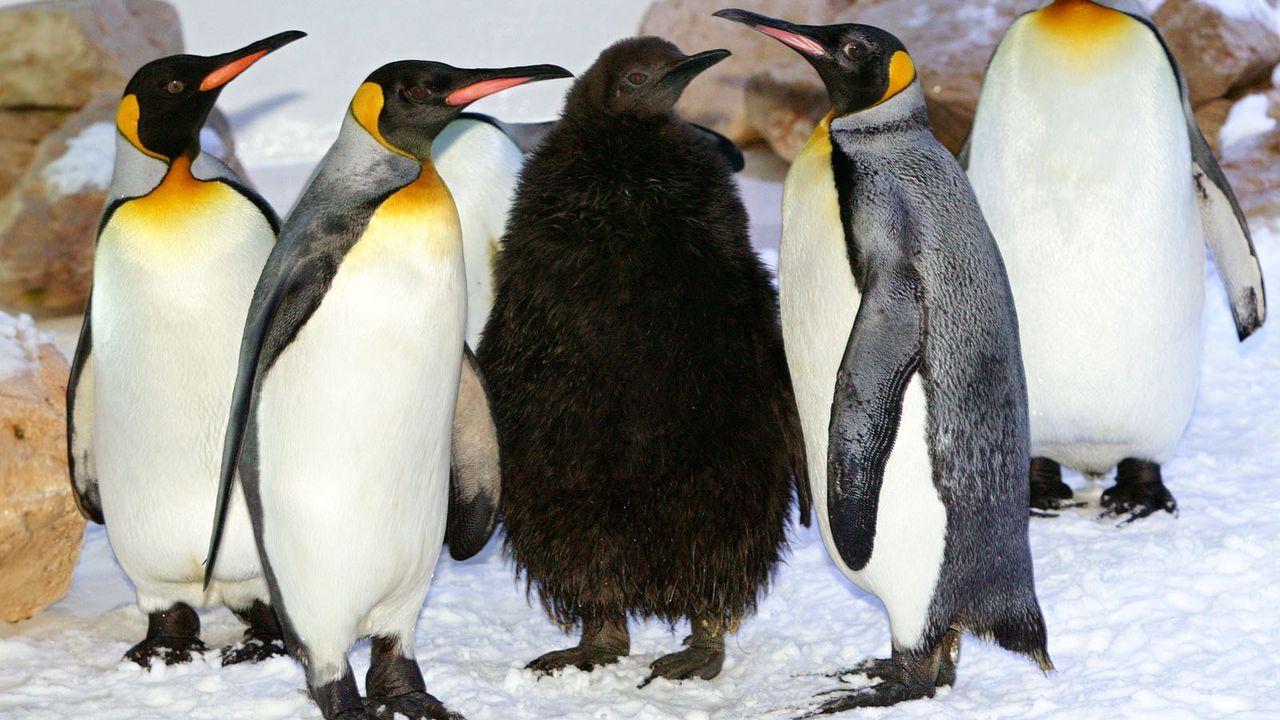 Pinguine - Bildquelle: dpa