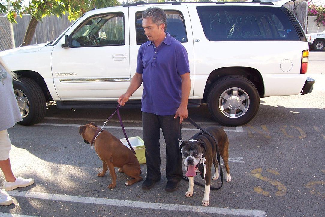 Der Hundeflüsterer Cesar Millan hilft heute Scott Lincoln und seiner Frau, die sich um streunende Hunde kümmern ... - Bildquelle: Rive Gauche Intern. Television