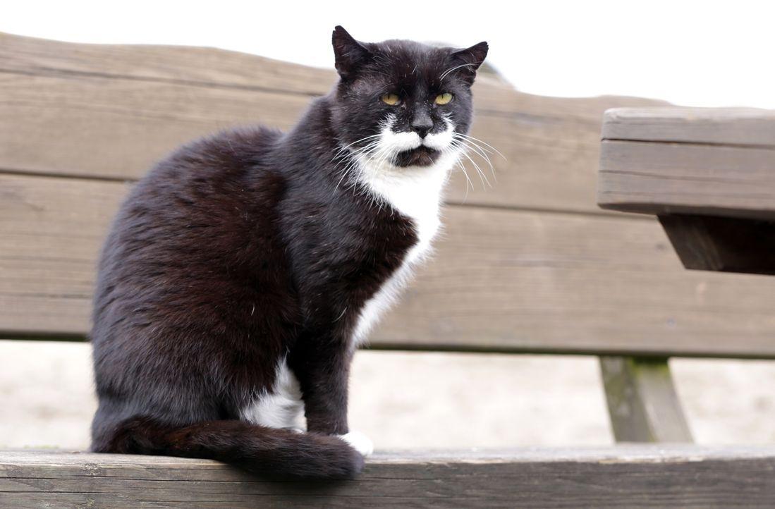 """Auf dem idyllischen Pferdehof  """"Gut Herrenhöhe"""" führen die Katzen ein wunderbares Leben ... - Bildquelle: SAT.1 Gold"""