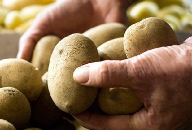 fruehstuecksfernsehen-rezepte-kartoffeln-allgemein-2011-620_250-dpa