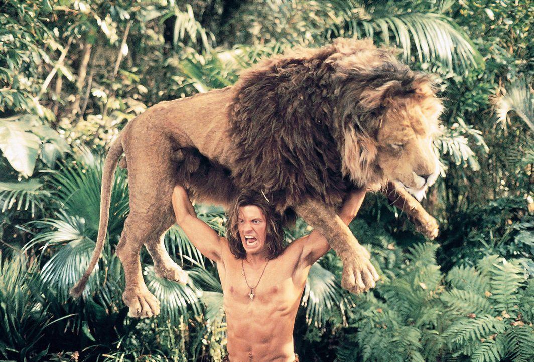 Eines Tages kann der tollpatschige Urwaldbewohner George (Brendan Fraser) eine wunderschöne Blondine vor einem Löwen retten. Prompt verliebt er si... - Bildquelle: Disney Enterprises Inc.