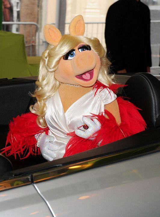 muppets-premiere-la-miss-piggy2-wireimagejpg 1327 x 1800 - Bildquelle: WireImage