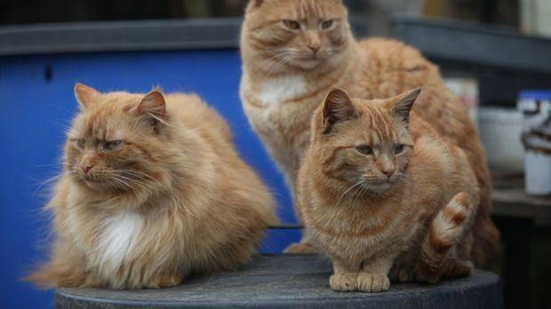 Katzen haben viele Geheimnisse. In dieser Dokumentation werden einige davon e...