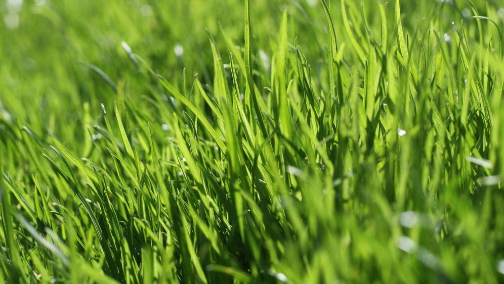 Rasen Anlegen Anleitung Sat 1 Ratgeber