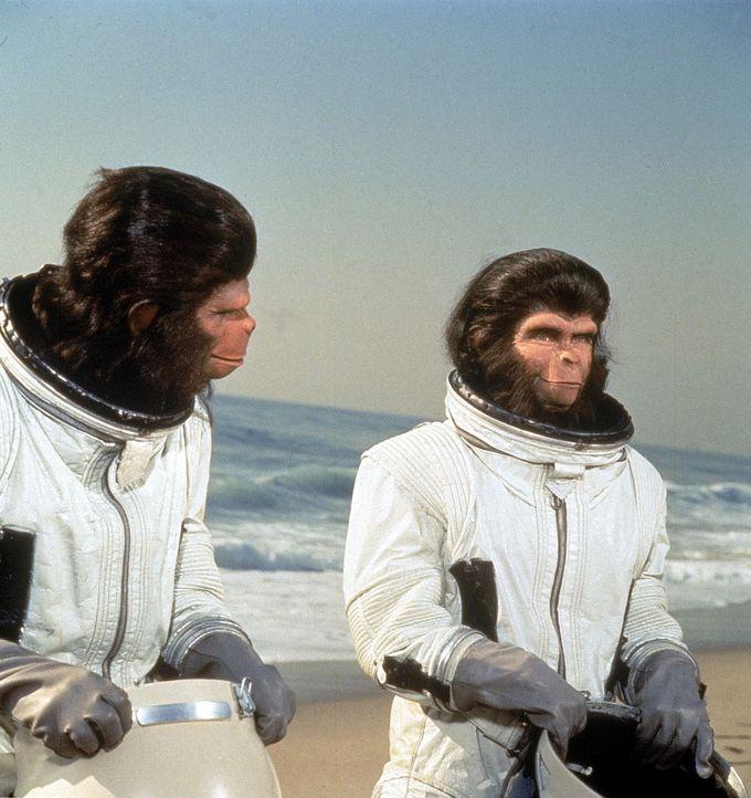 Dem intelligenten, der menschlichen Sprache mächtigen Schimpansenpaar Dr. Cornelius (Roddy McDowall, r.) und Dr. Zira und Dr. Milo (Sal Mineo, l.)...
