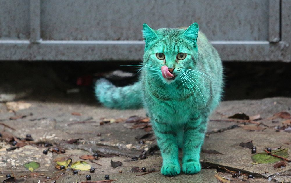 Grüne Katze - Bildquelle: DPA